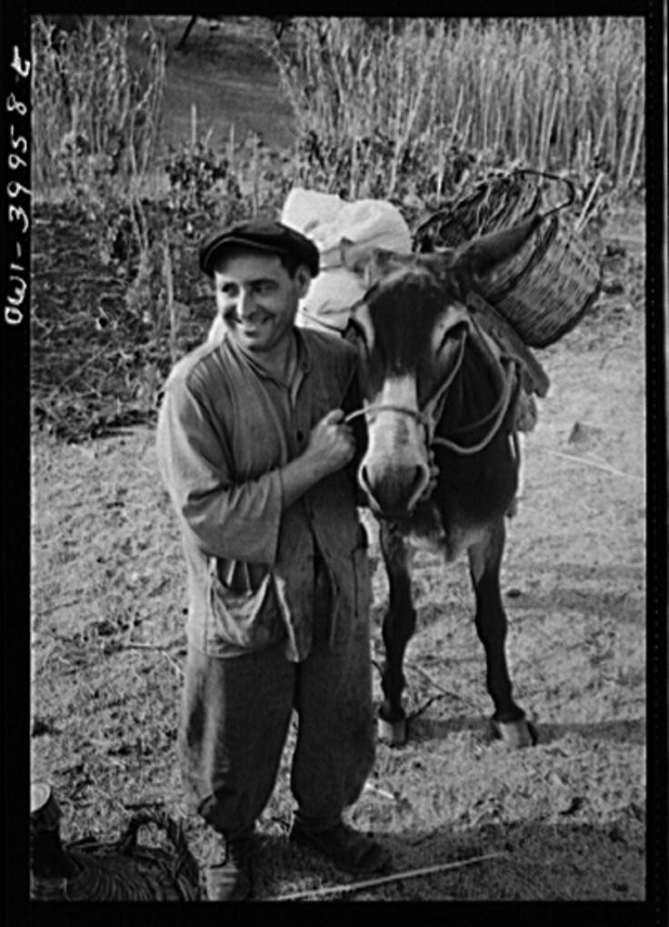 A Sicilian farmer and a farm donkey.  Un contadino siciliano e un mulo. (1943)