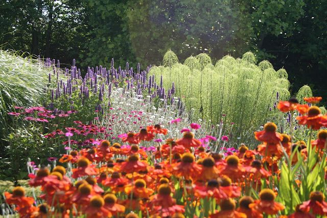 Mixed border, orange helenium and blue salvia