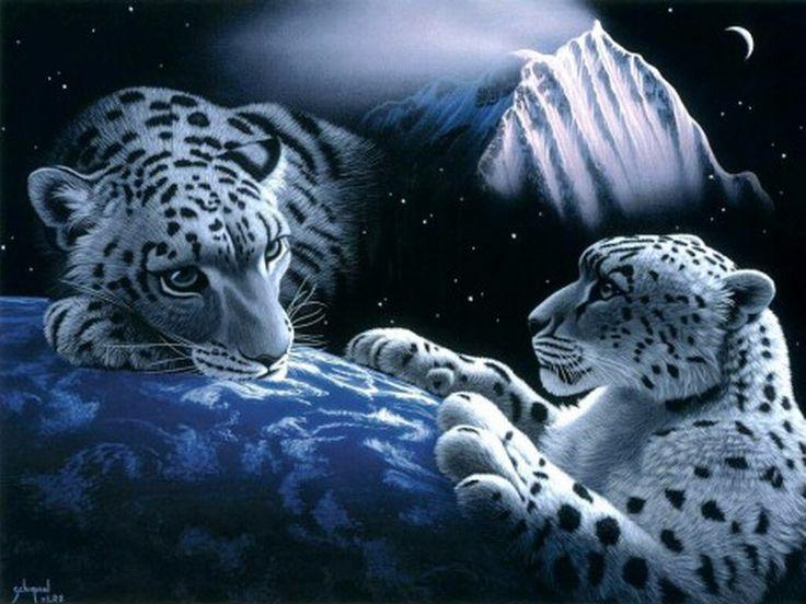 Tygři   Welcome