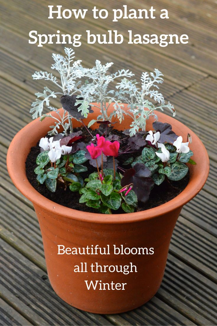 89 best gardening images on pinterest flowers flower gardening