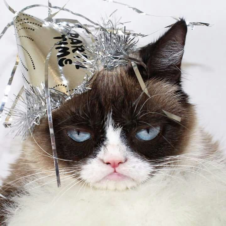 59 best images about new years cats on pinterest
