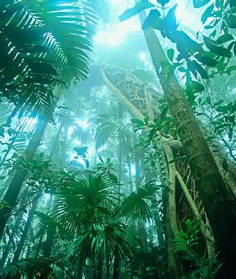 Rainforest on Fraser Island.Australia- one of my favorite places :)