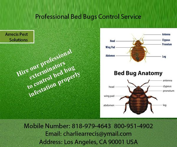 We Provide Bed Bugs And Rodents Control Service To Its Customers In Los Angeles Ca They Also Offer Attic Rem Bed Bugs Bed Bug Control Pest Solutions
