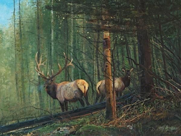 Deep woods courtship michael coleman animaux for Jackson wyoming alloggio cabine