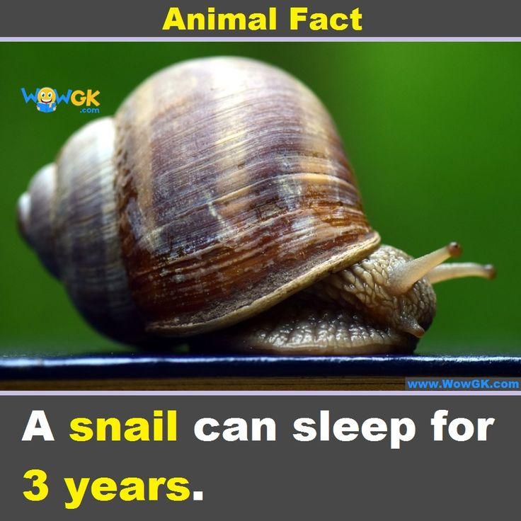 13+ How long do animals hibernate ideas in 2021