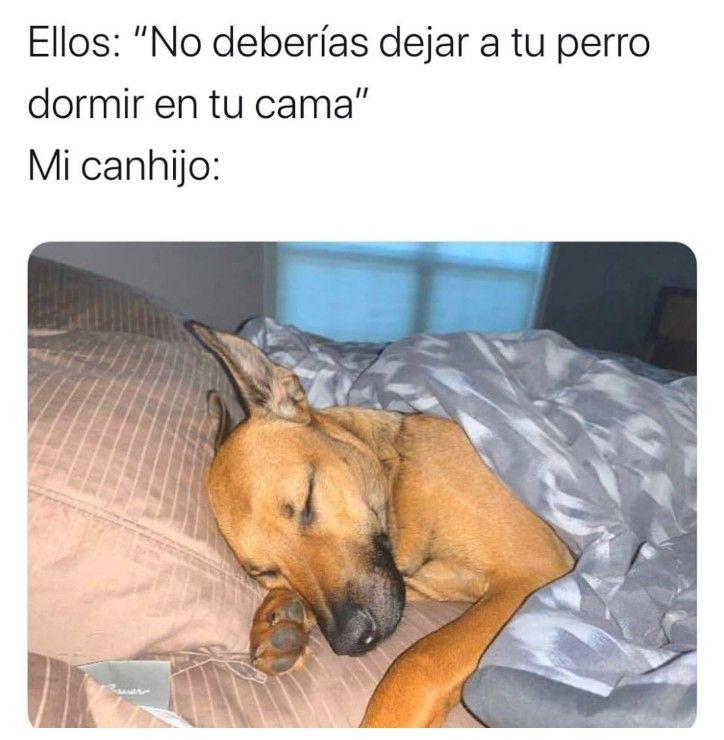 Pin De Bethy Valdez En Memes Perros Durmiendo Perros Dejen Dormir