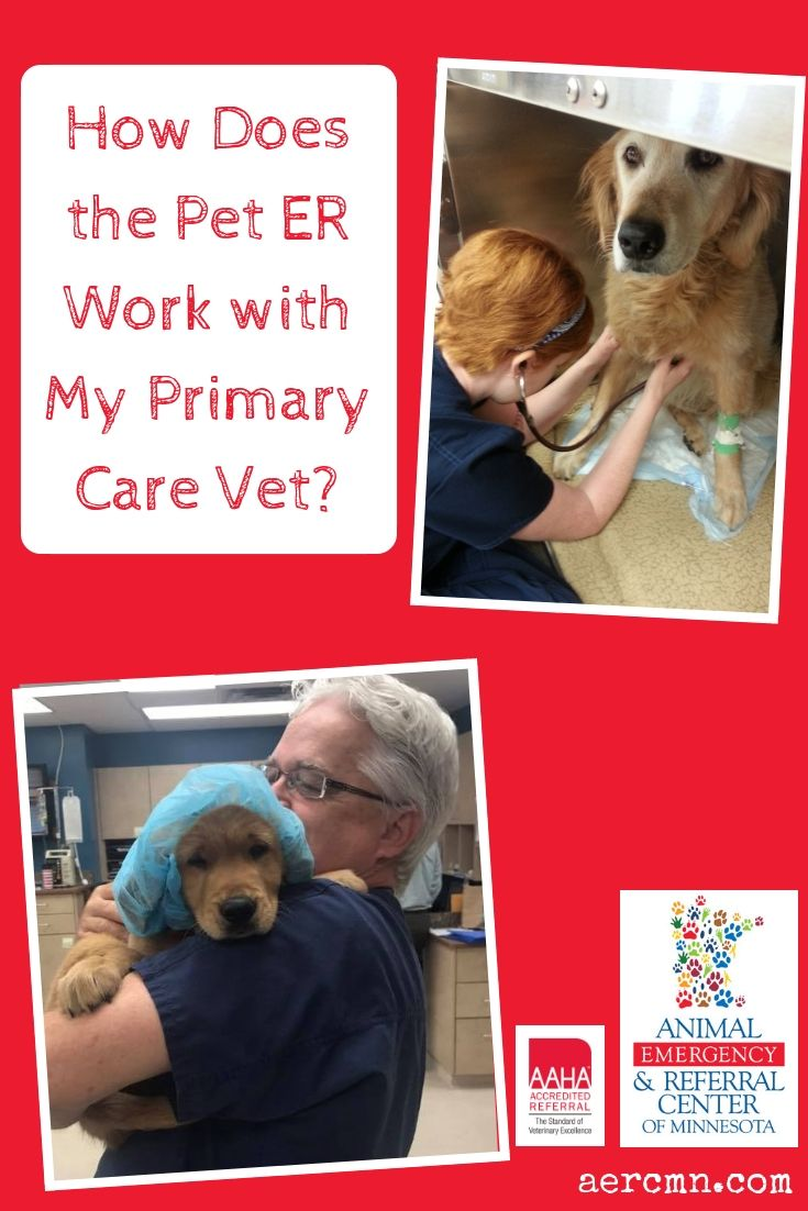 How Does The Pet Er Work With My Primary Care Vet Primary Care Emergency Vet Vets