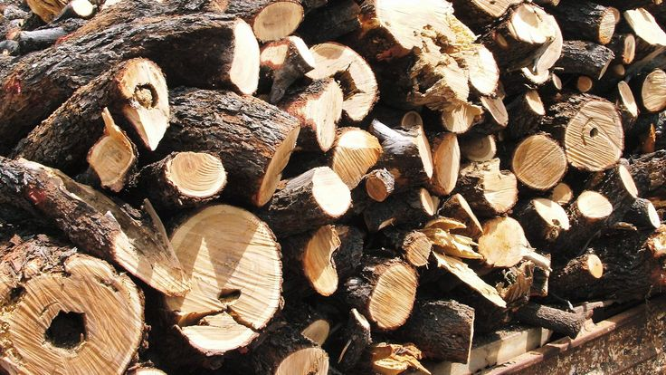 Lifting the lid on sandalwood - Perhaps best known for its sweet, rich scent, Sandalwood has a darker side. One of smuggling, kidnap and intrigue...