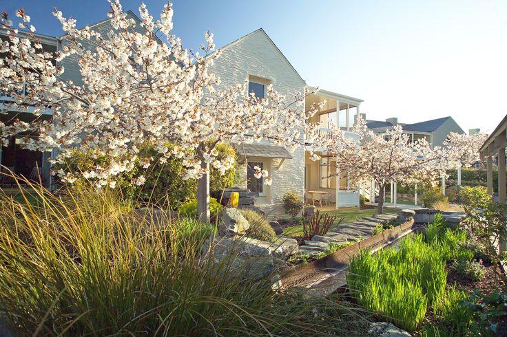 Hotel Villa with Cherry blossom