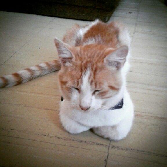 #Pelusa que haces acostado en en living te ves #genial #instakat #cat #gato #instacat