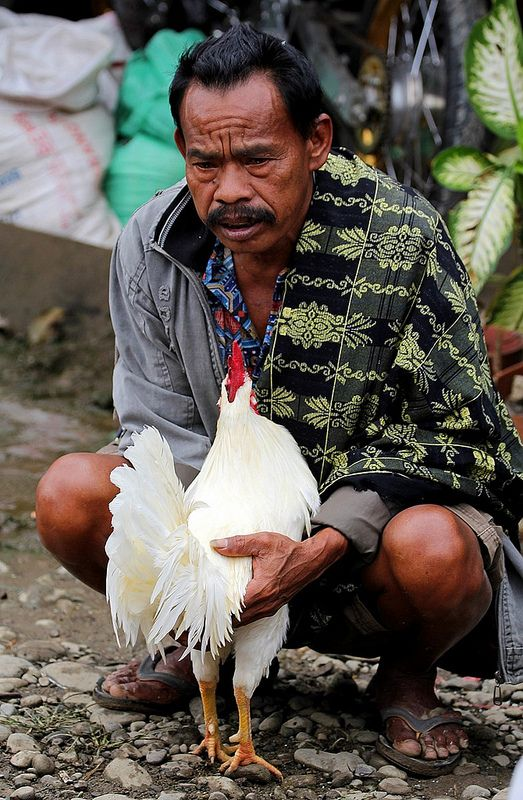 rooster, Rantepao, Sulawesi, Indonesia