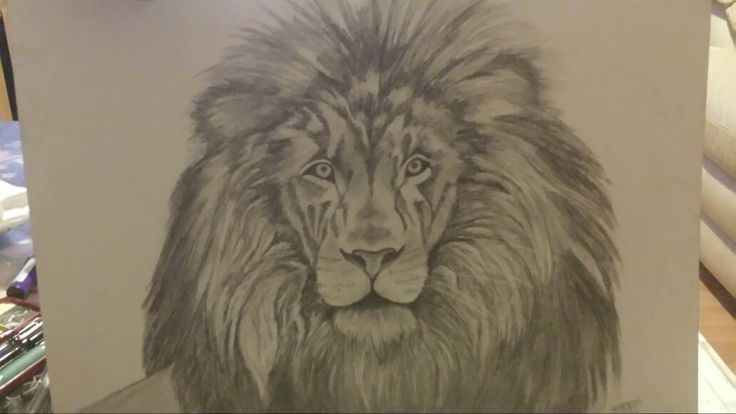 WILD Pencil Sketch of African Lion, Was a pleasure to draw this, sold within 4 minutes of being on line.  10 hours of work