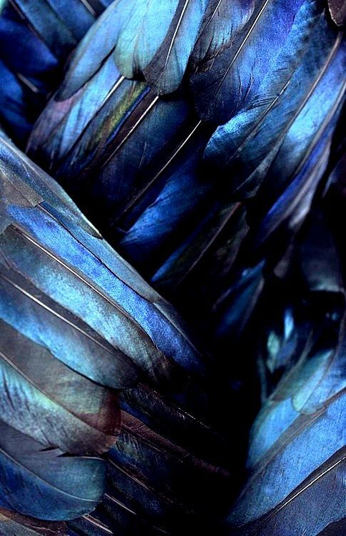 Navy blue. Feathers.