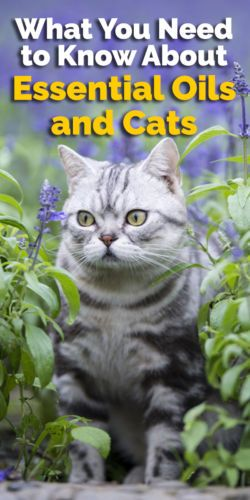 What You Need to Know About Essential Oils and Cats