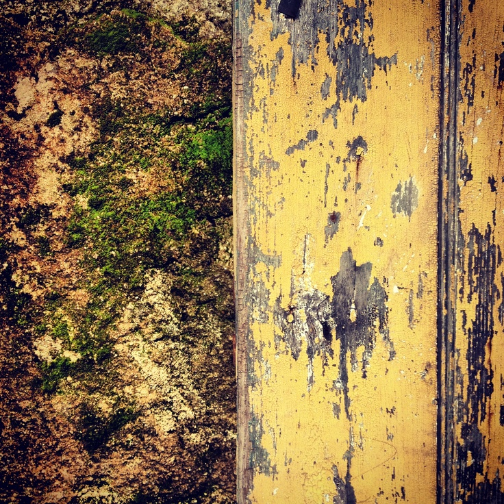 The Old Door and the Moss Wall