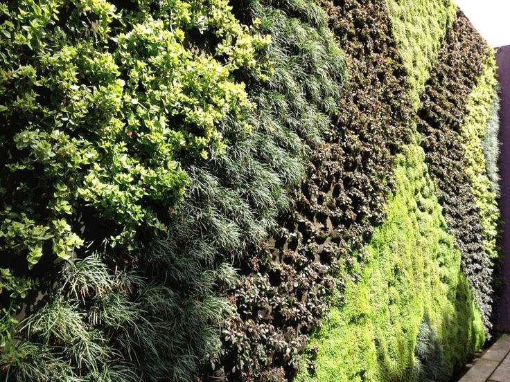 M s de 1000 im genes sobre muros verdes en pinterest for Jardineros ltda