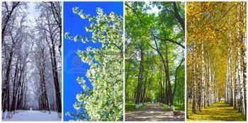 Négy évszak kollázs: tél, tavasz, nyár, ősz photo
