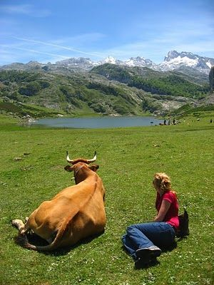 Asturias region in Spain; the Covadonga glacial lakes: Enol and La Ercina.  Hanging out with a vaca