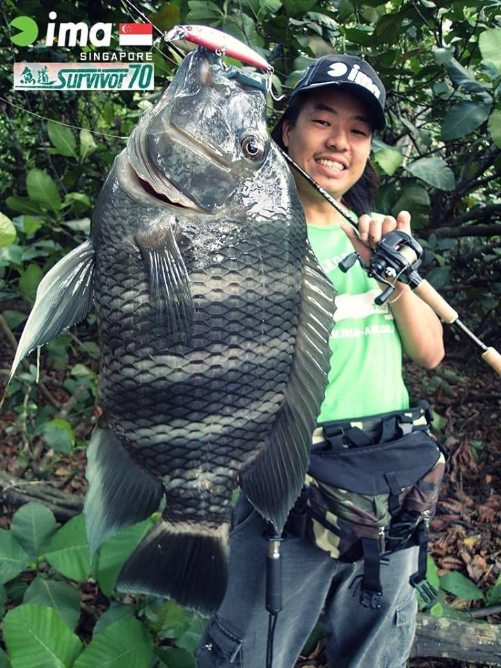 158 best images about fish id like to catch on pinterest for Is tilapia a fake fish