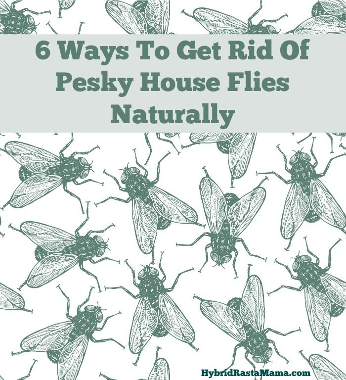 6 Ways To Get Rid Of Pesky House Flies Naturally! #1 is ACV and a little dish detergent in a bowl :)