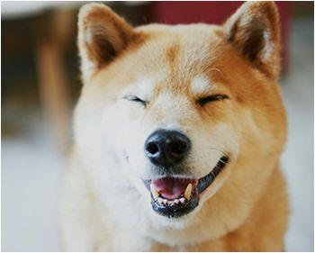 【ELLE DECOR】谷尻 誠がデザインしたベツダイの「BENTO HOUSE」に柴犬まるが遊びに来てくれた!|エル・デコ・オンライン