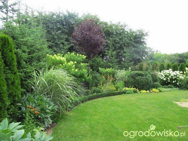 Ogród KasiWB - część II - strona 14 - Forum ogrodnicze - Ogrodowisko