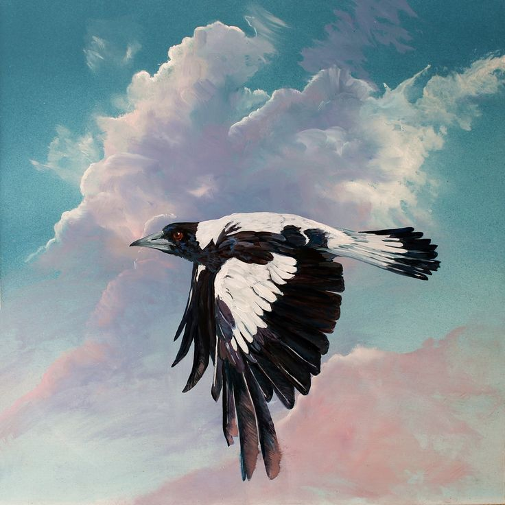 the-art-of-riding-on-the-wind-no-7-australian-magpie-a.jpg (1280×1280)