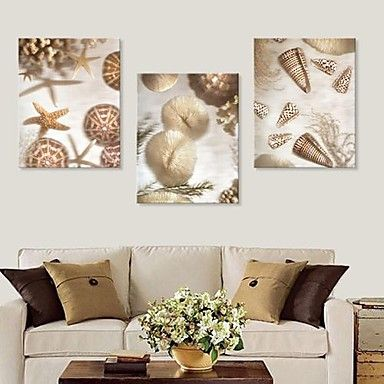 Stretched Canvas Art Beautiful Shells Set of 3 – AUD $ 82.63