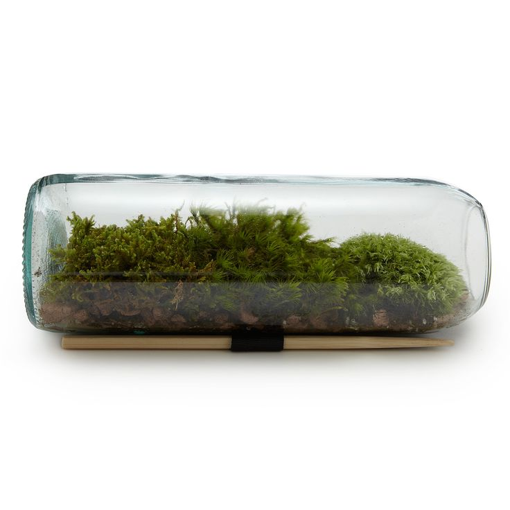 MOSS TERRARIUM BOTTLE    Mother Nature In A Bottle  Bring the tranquility of the outdoors inside with this mossy microcosm that adds the calm presence of nature to spaces that could use an antidote to daily stress. This modern take on the terrarium features an urbanized micro ecosystem housed within a recycled wine bottle. Made in USA.