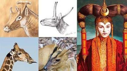 La reina Amidala, de Star Wars, da nombre a un pariente de la jirafa