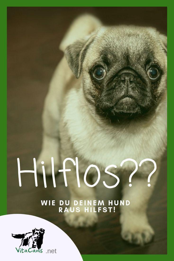Erlernte Hilflosigkeit Wenn Dein Hund Keinen Ausweg Mehr Weiss