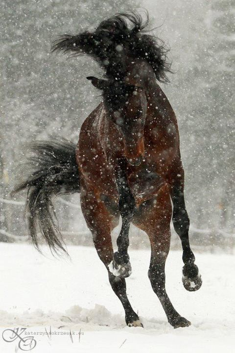 Horse frolicking in the snow.