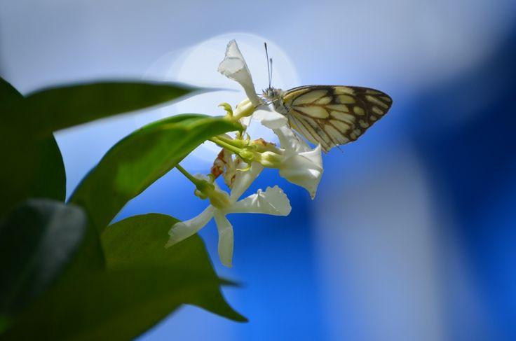 Butterfly season on the farm