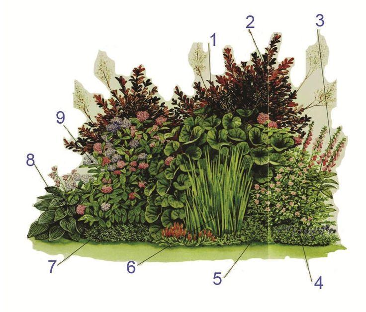 Клумба из неприхотливых растений