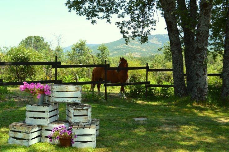 Caballo en prado, finca bodas Madrid, http://www.buscabodas.com