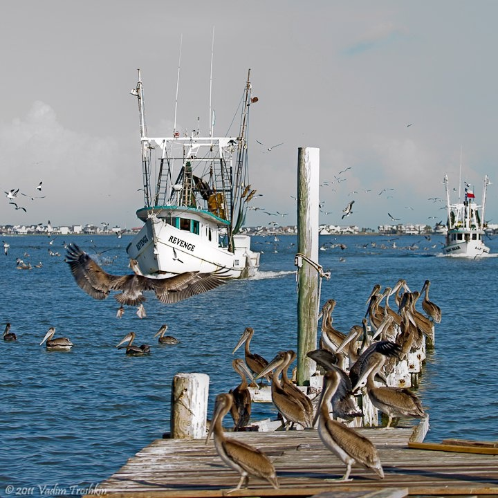10 Best Images About Trawlers On Pinterest