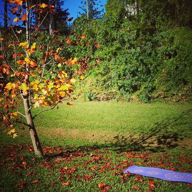 Everybody needs a friend! #friendship #colorful #autumn #yoga #motivation #pretty #tree