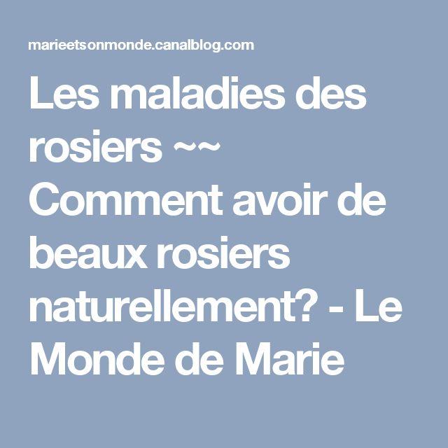 Les maladies des rosiers ~~ Comment avoir de beaux rosiers naturellement? - Le Monde de Marie