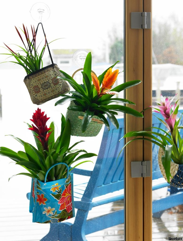 Bromeliad in the bag! www.bromelia.info: Pure, Home, Bromeliad, Energetic Style, Within, Color Therapy, Pure Life