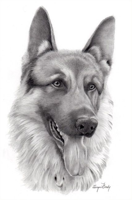 German Shepard Drawing // realistic-pencil-drawings-of ...