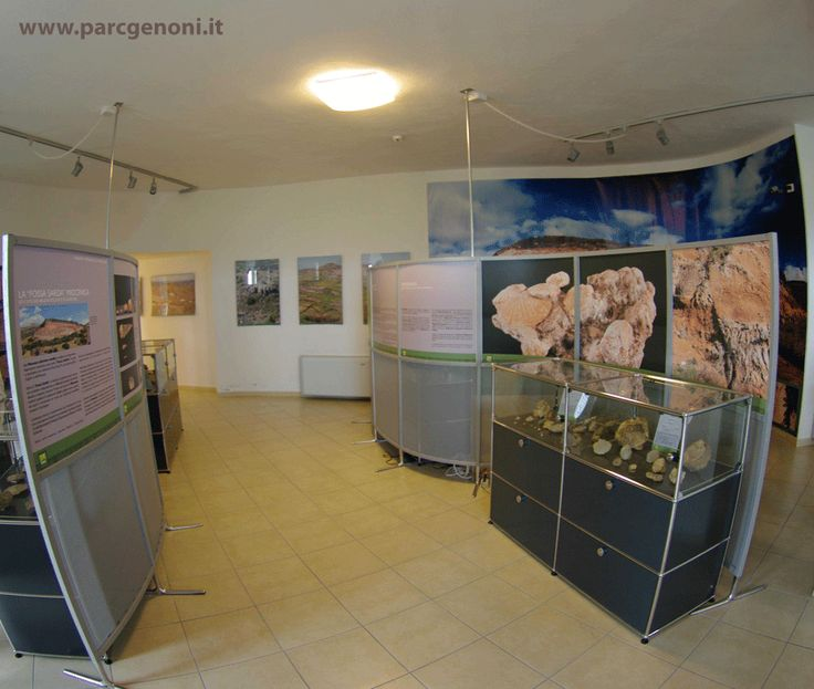 La sezione paleontologica.  The palaeontological section.