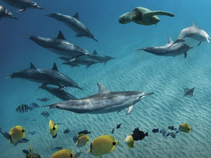 DAILY COMMUTE by CreationScape - Animals And Water Photo Contest
