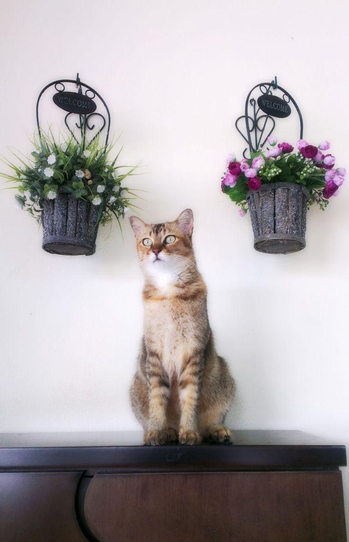 Bagaimana Merawat Kucing Yang Cirit-Birit | Alam Kucing
