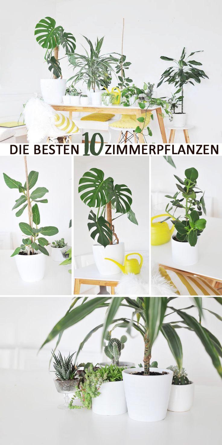 Die besten zimmerpflanzen f r die wohnung garten for Zimmerpflanzen wohnzimmer