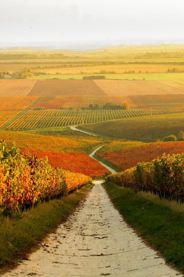 Autumn vineyard in Hungary... I bet they have AMAZING wine!!! ;~)
