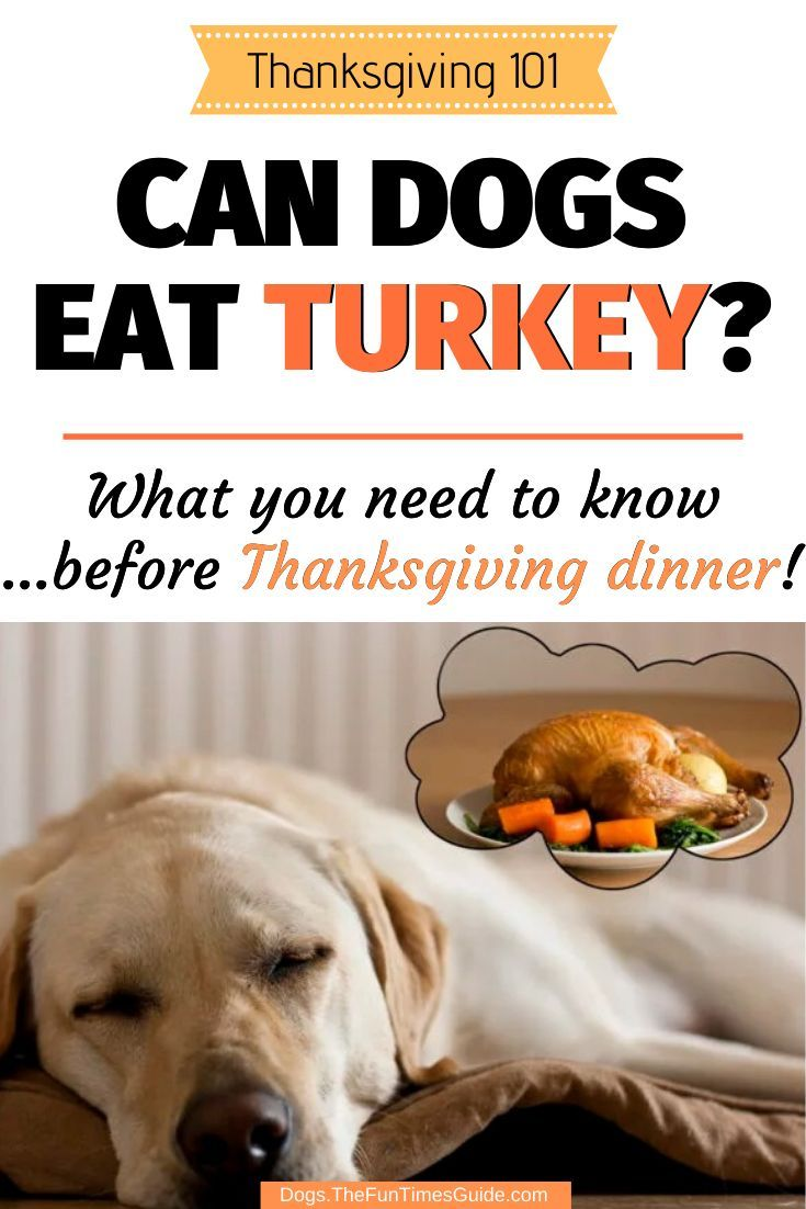 Dog Thanksgiving Tips Can Dogs Eat Turkey Can Dogs Eat Dog
