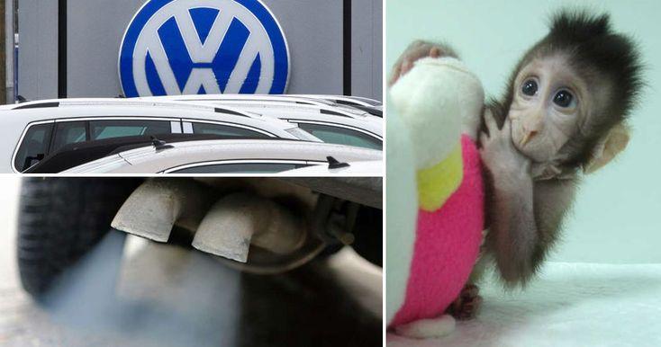 Компания проводила эксперимент, в ходе которого обезьяны, запертые в герметичной камере, дышали выхлопными газами дизельного Volkswagen.