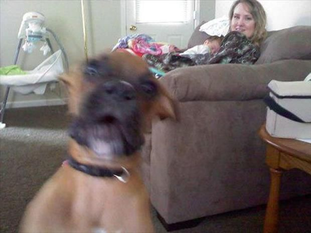 Best Animal Photobombs Images On Pinterest Dog Photos - 35 hilarious animal photobombs ever