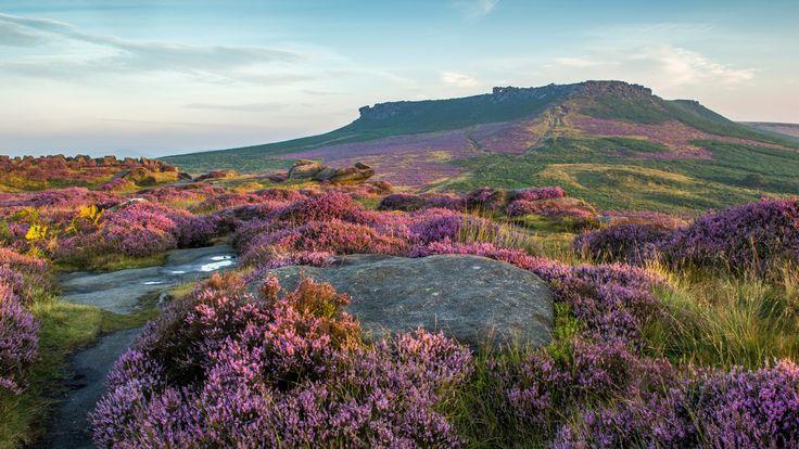 Скачать обои цветы, Пик-Дистрикт, луга, поля, Peak District National Park, холм, лаванда, Великобритания, трава, камни, раздел пейзажи в разрешении 1920x1080
