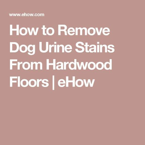 25+ best ideas about Urine stains on Pinterest | Skunk removal, Remove  stains from mattress and Pet stain removers - 25+ Best Ideas About Urine Stains On Pinterest Skunk Removal